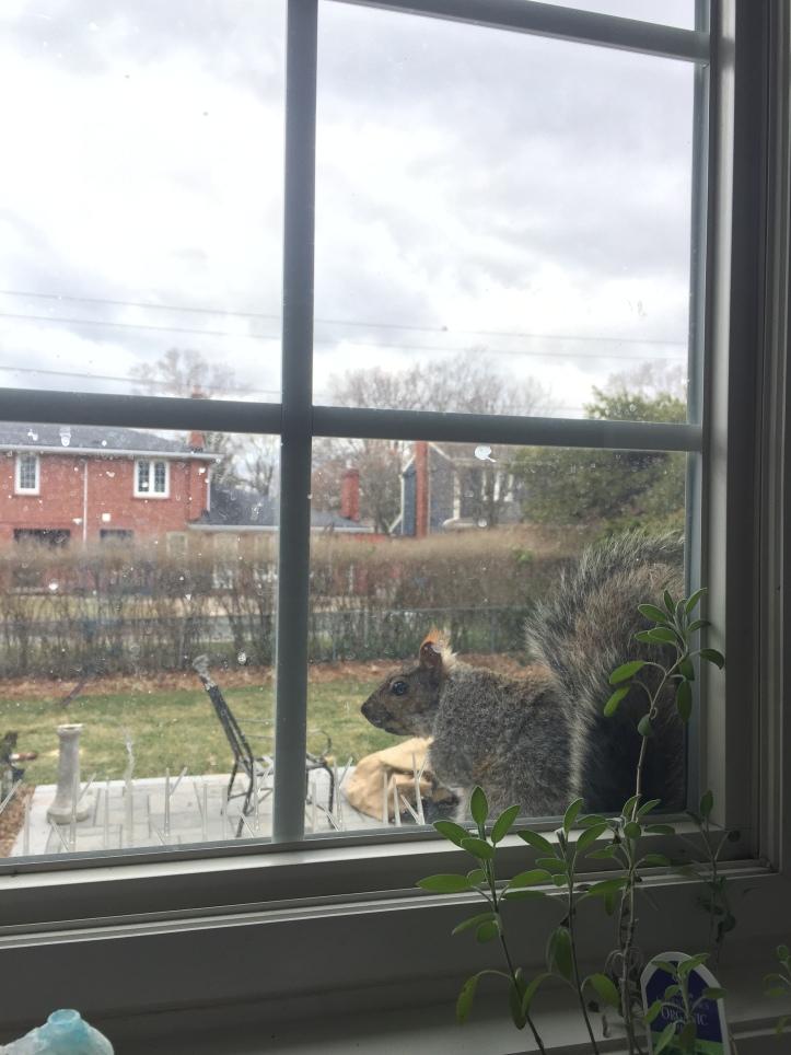 Squirrel on a window ledge